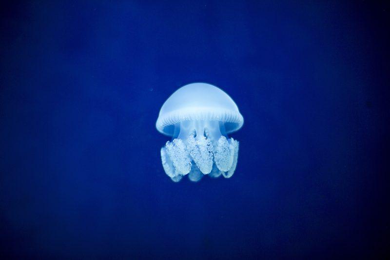 meduse-parlonsmaisons