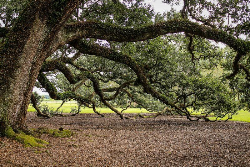 olivier-parlonsmaisons